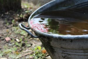 Wasser sparen durch Regenwassernutzung